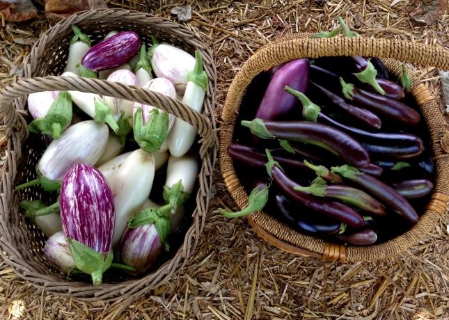 eggplant basket