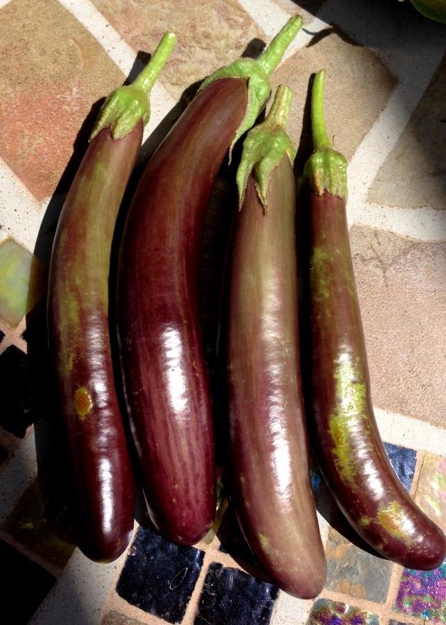 little finger eggplant