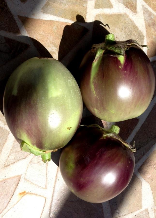 ukranian beauty eggplant