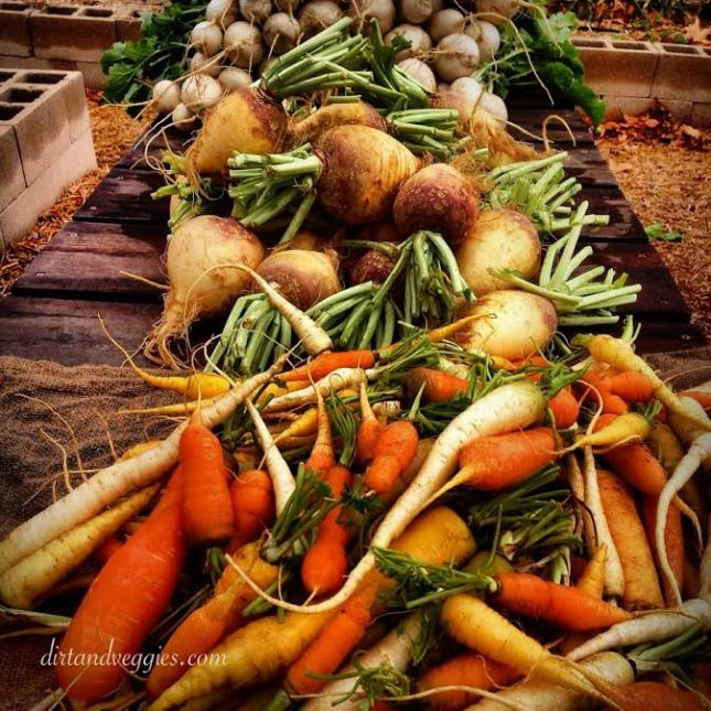 Rutabagas, Carrots and Turnips