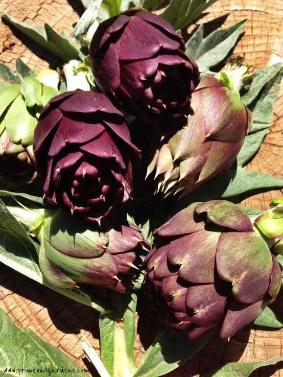 Violet de Provence artichokes