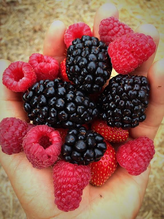 blackberries, raspberries and strawberries.