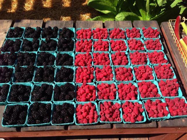 raspberries and blackberries.