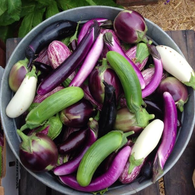 Eggplants come in so many shapes and sizes. Bangladeshi long, ping tung, casper, Ukranian Beauty, Listada de gandia, Japanese.