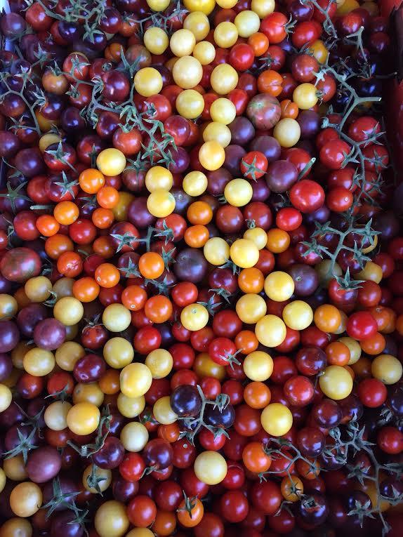 cherry tomatoes 4