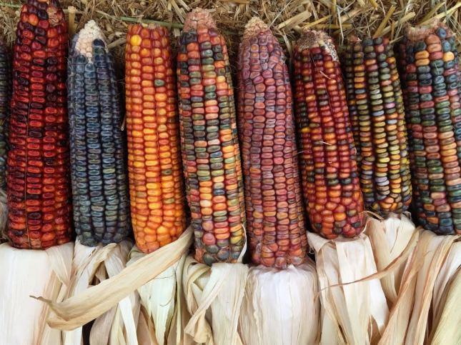 earth tones corn 4
